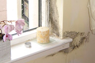 Condensation help and information from White Preservation
