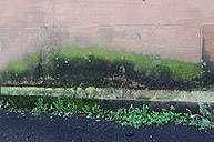 Rising Damp help and information from White Preservation