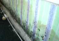 Rising damp and condensation