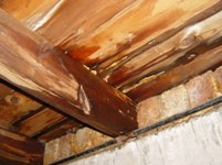Wet Rot in Joist